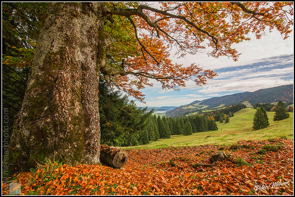 autumn in allgau